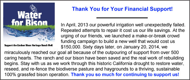 In April, 2013 our powerful irrigation well unexpectedly failed. Repeated attempts to repair it cost us our life savings. At the urging of our friends, we launched a make-or-break crowd funding campaign to build a new well that would cost us $150,000. Sixty days later, on January 20, 2014, we miraculously reached our goal all because of the outpouring of support by over 500 caring hearts. The ranch and our bison have been saved and the real work of rebuilding begins. Stay with us as we work through this historic California drought to restore water, reseed, re-fence the biodiverse pasture and haygrounds to a thriving, sustainable 100% grassfed bison operation.